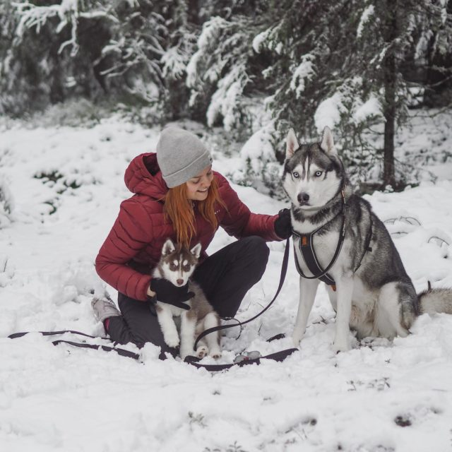 Vuoden 2021 ensimmäinen päivä!🍀 Mä en itse tehnyt tänä(kään) vuonna uudenvuodenlupauksia, mutta mua kiinnostaisi kuulla teitkö sä mitään lupauksia/tavotteita tälle vuodelle?❄️  Ps. Ihanaa, kun Tampereellekkin tuli vihdoin talvi❄️🤩 . . . #siberianhuskies #siberianhuskypuppy #huskypuppy #huskyboy #huskiesofinstagram #winterwonderland #suomenluonto #tampere #siperianhusky #siberianhuskyworld #gingerhairgirl #gingerhairdontcare #instabloggers #outdoorlover #hikingwithdogs #hikingadventures #outdooradventures #outdoorfinland #kotimaanmatkailu #outdoorfashion #happynewyear #uudenvuodenlupaus