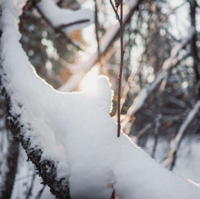 Mahtava talvi takanapäin ja hieman harmittaa katsoa tämän viikon säätiedotusta, kun plussaa ja vesisadetta luvattuna! Toisaalta ihan kiva, että se kevätkin tulee taas🌤❄️ . . . #winterwonderland #ourmoment #finnishnature #luontoonfi #lähellä #kotimaanmatkailu #ourfinland #tampere #visittampere #suomenluonto #sunsetphotography #talvenihmemaa #ulkonaperillä #talviretki #bloggaaja #outdoormoments #hikingadventures