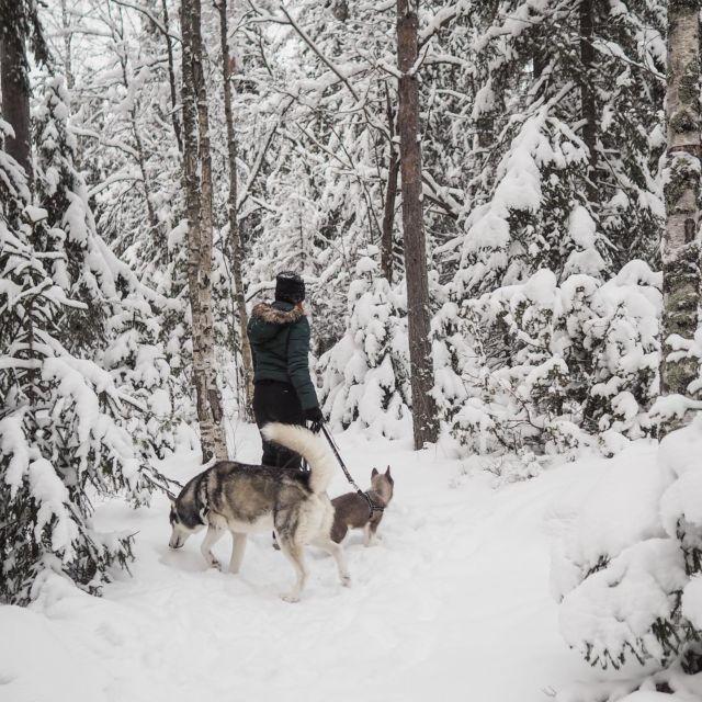 Jaahas se olisikin seuraavaksi talviloma!❄️ Mun talviloma tosin menee koulujuttujen rästihommissa, töissä ja omissa somejutuissa(kuten blogissa missä oon ollut ihan liian hiljanen). Se siitä lomasta siis😅  Onko sulla talvilomaa ja jos on, mitkä on suunnitelmat sille? . . . #talviloma #hiihtoloma #vacationmood #siberianhuskies #siberianhusky #siperianhusky #huskypuppy #snowdogs #somevaikuttajatfinland #vaikuttajatfinland #vaikuttajamedia #bloggaaja #hikingwithdogs #hikingadventures #luontoonfi #halimasjärvi #tampere #ourfinland #finnishnature #suomentalvi #ulkonaperillä #outdoorfinland #outdooradventures