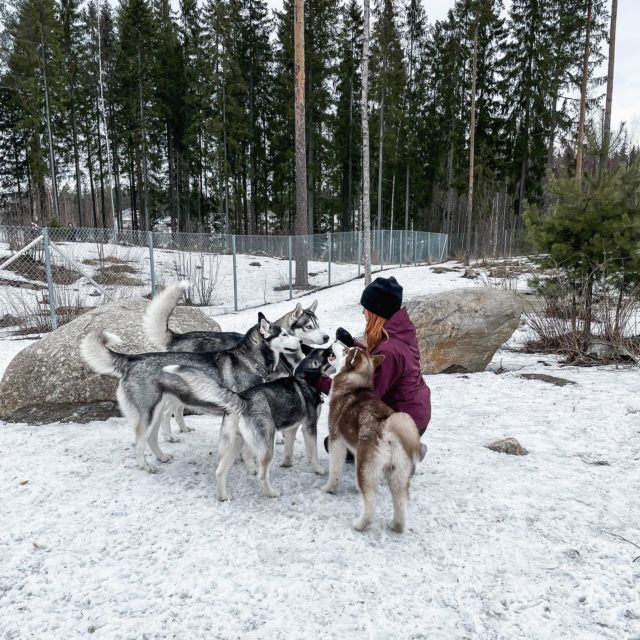 Kuka arvaa mun lempi koirarodun?🐺 . . . #siperianhusky #huskies #huskylove #huskypuppy #dogsofinstagram #siberianhuskies #somevaikuttaja #somevaikuttajatfinland #instablogit #outdoorgirl #outdoorbloggers #retkellä #vaikuttajatfinland #vaikuttajamedia #hikingwithdogs